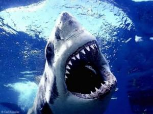 Shark Attack In Maine Bar Jeopardizes Summer Tourism   The