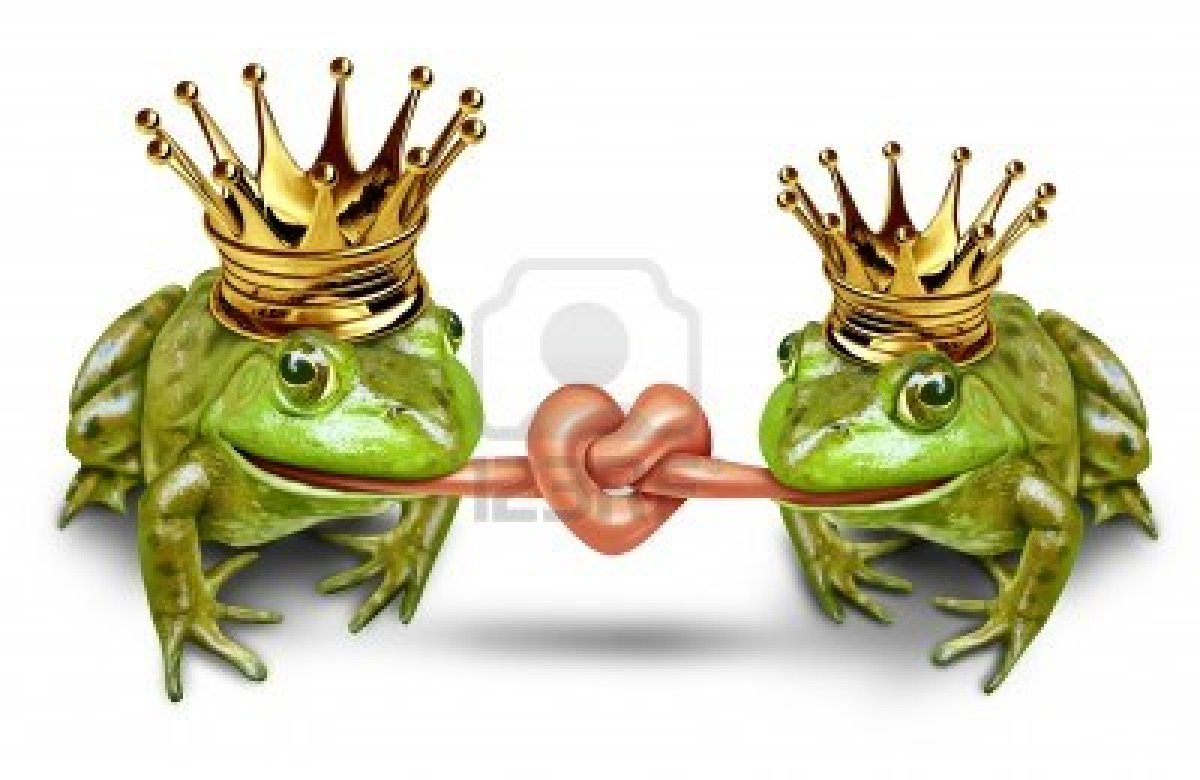 Two Frogs in Love Frog Love