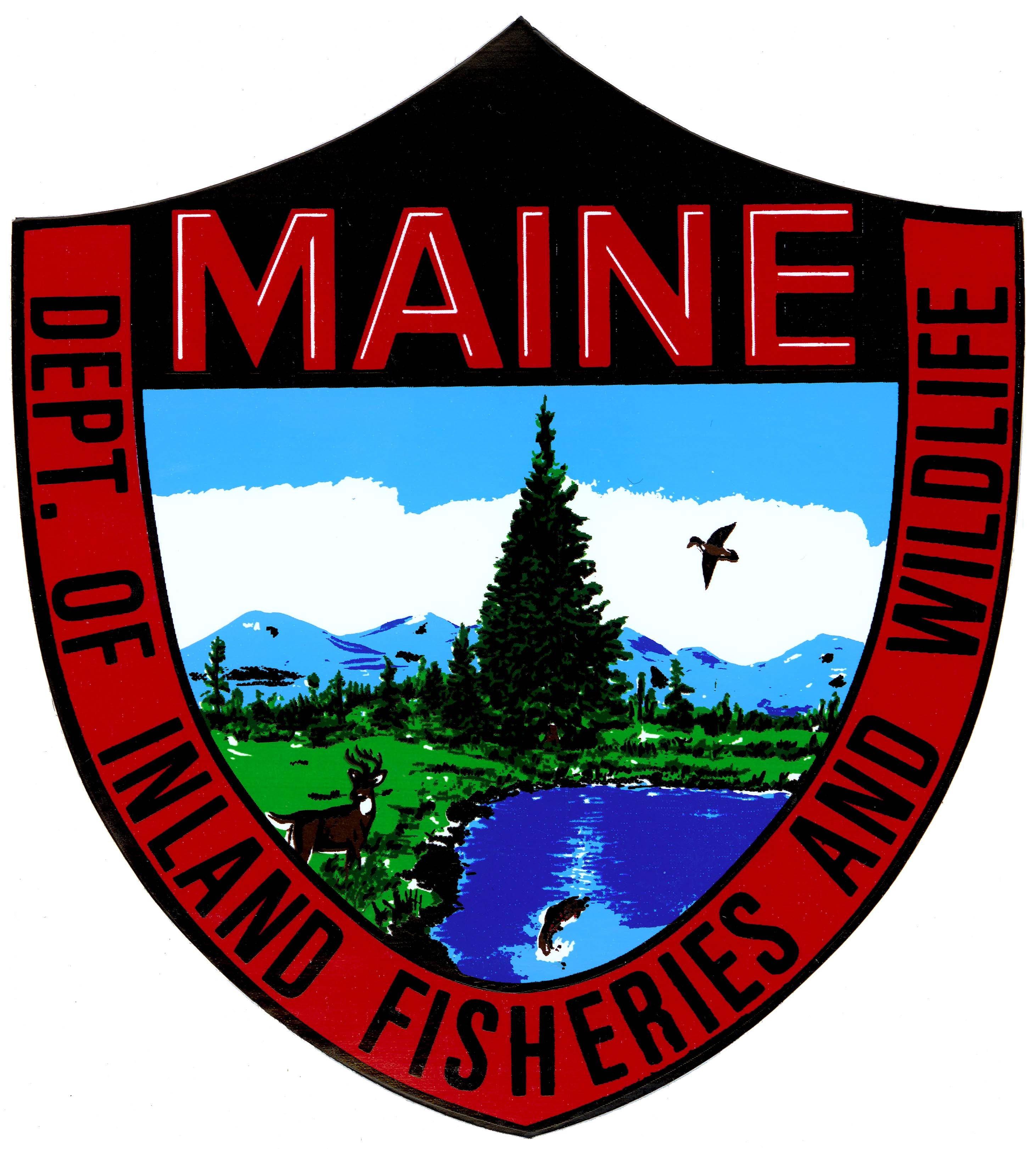 Maine sharkwolf report ends up being drunk hoax the for Maine fish wildlife