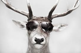 reindeer shades