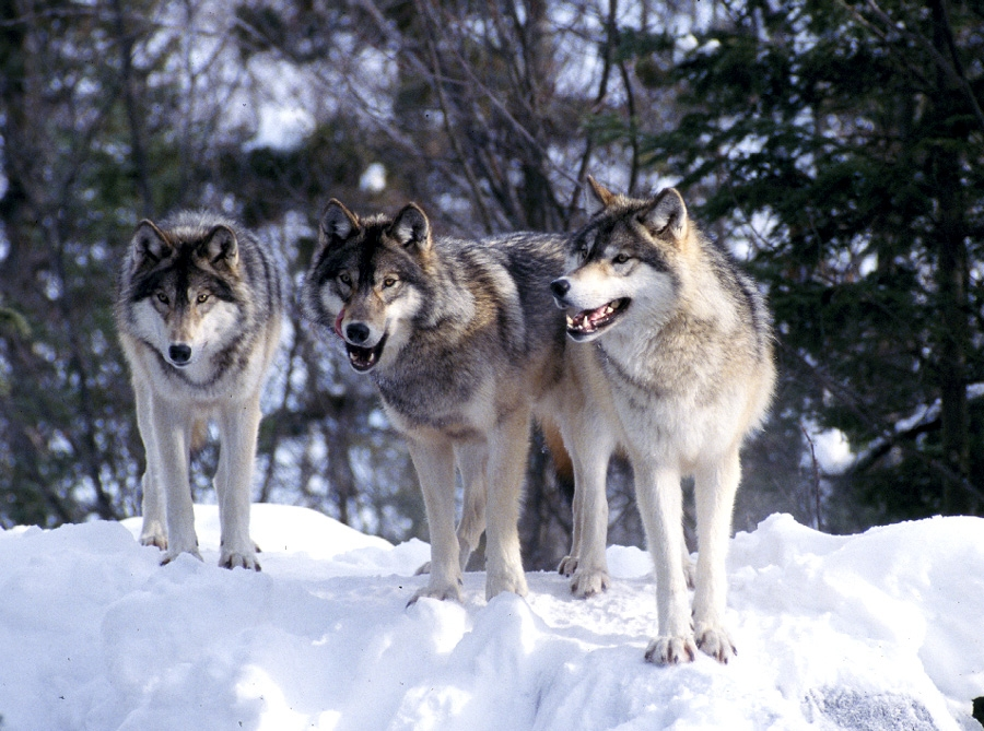 Maine's Werewolves: Winter In Maine Is Awesome! | The ...