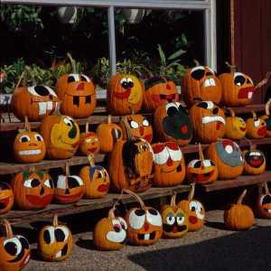 pumpkins no kill