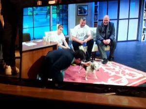 A Nite Show Dog