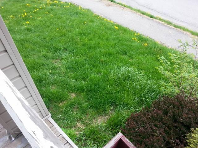 Lawn 10