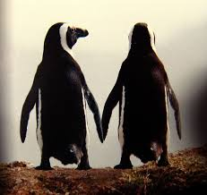 penguin love 2