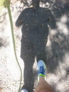 run 12