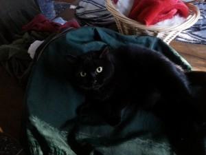 Cali Cat 2