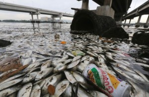 Rio, Summer Olympics, dead fish, pollution, Modern Philosopher