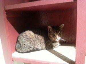 Luna, cats, pets, loss of a pet, life, Modern Philosopher