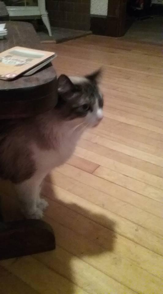 cats, pets, adoption, Modern Philosopher