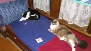 cats, pets, short story, humor, Modern Philosopher