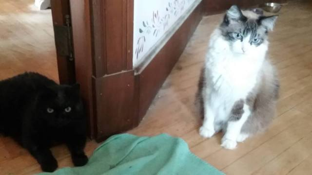 cats, pets, animal adoption, humor, Modern Philosopher