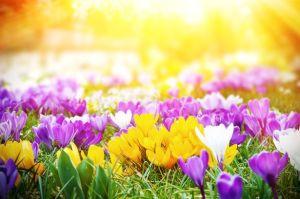 Spring, weather, humor, Modern Philosopher